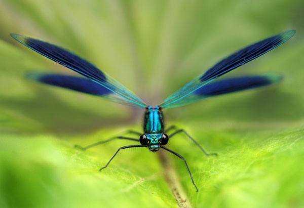 macro photography examples inspiration