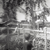 Taking Your Pinhole Camera to the Zoo &#8211; Lomography Tipster