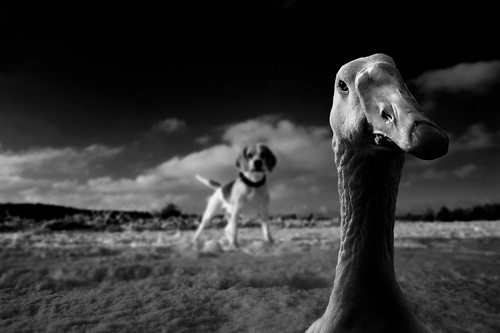Black and White Photography examples