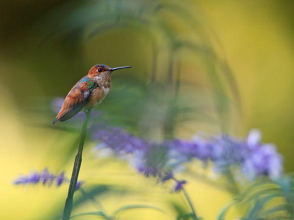 Bird Photography