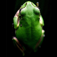 100 Fantastic Photos of Reptiles and Amphibians